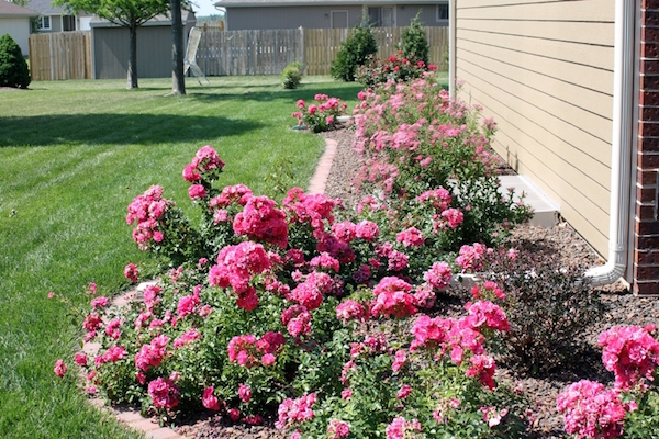 rose-landscape-design